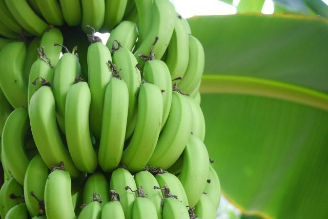 坂上&指原つぶれない店もんげーバナナは通販で買える?評判・口コミは?